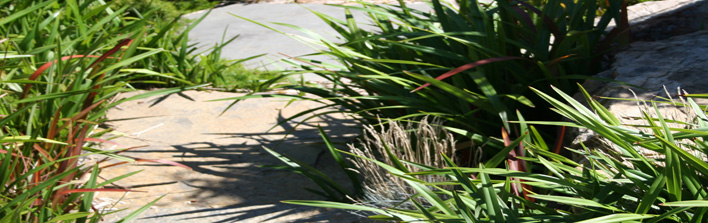 Established grasses on walkway